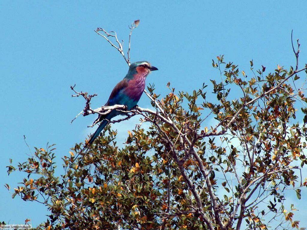 Foto di Uccelli vari 033