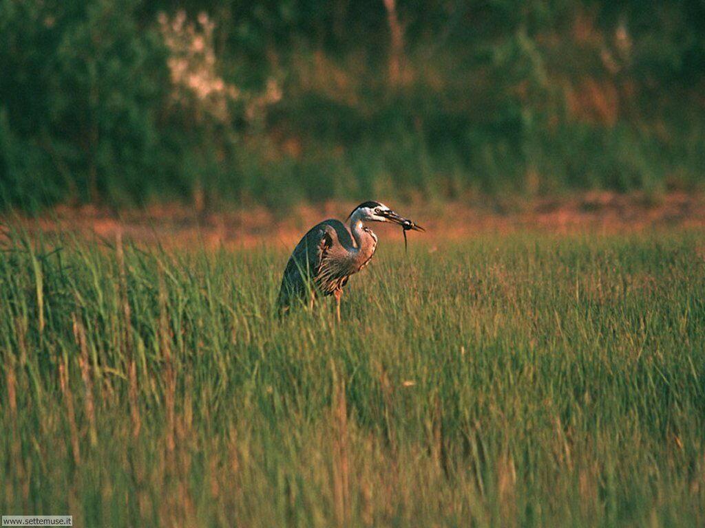 Foto di Uccelli vari 035