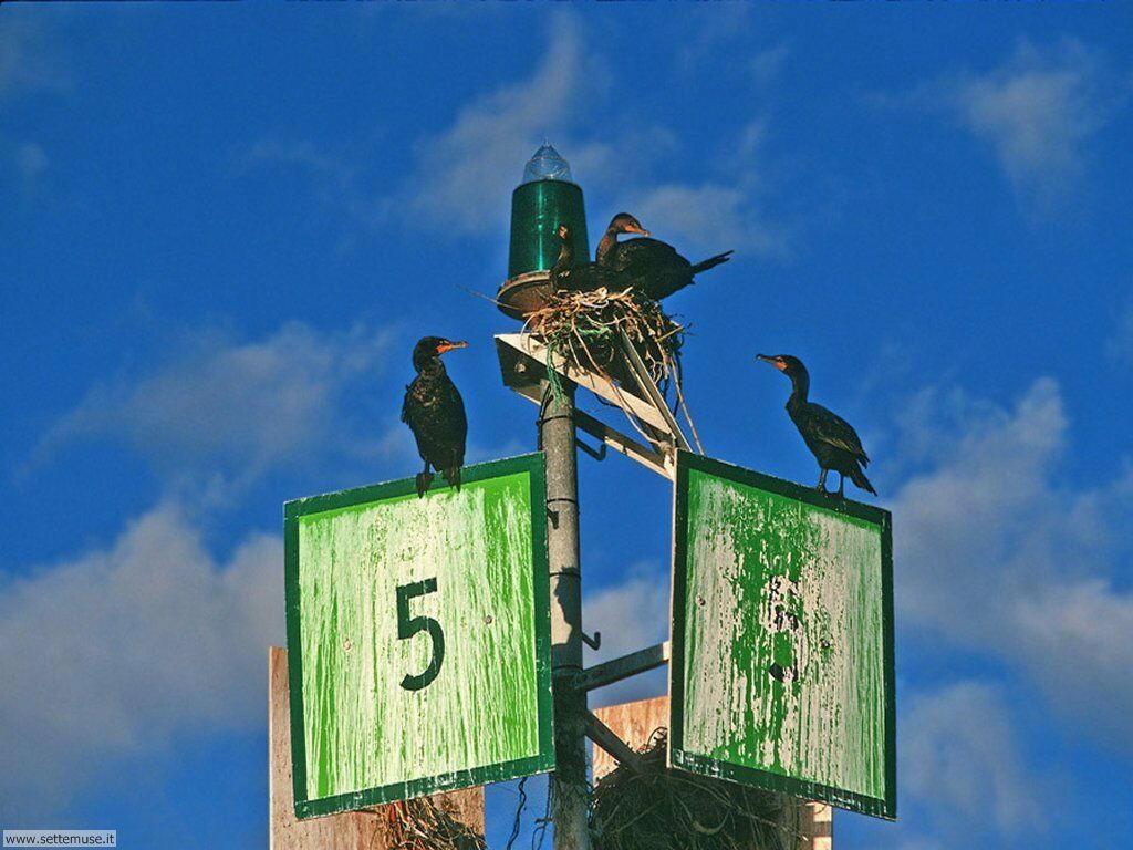 Foto di Uccelli vari 036