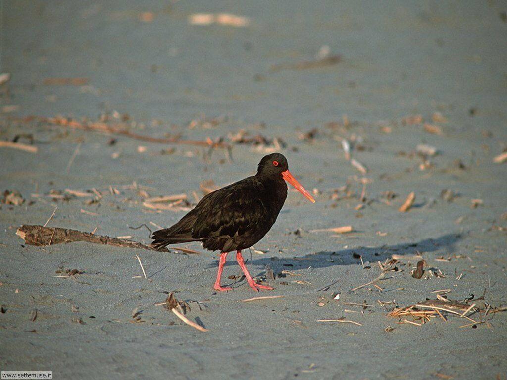 Foto di Uccelli vari 041