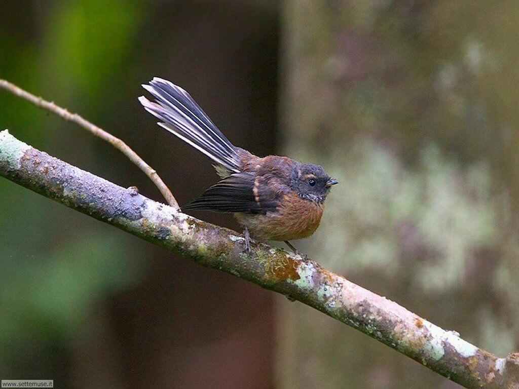 Foto di Uccelli vari 043
