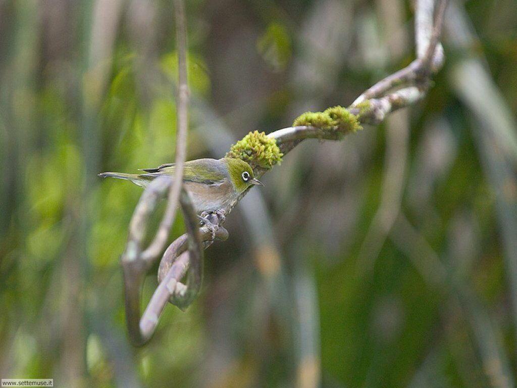 Foto di Uccelli vari 047