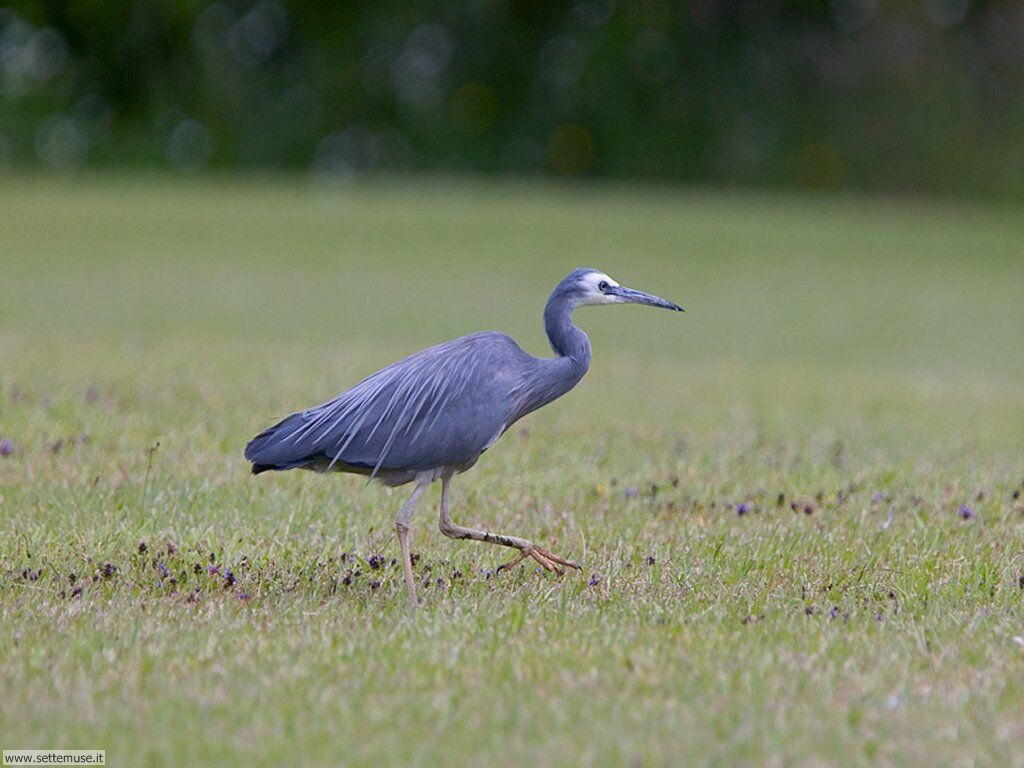 Foto di Uccelli vari 048