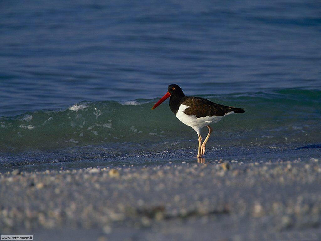 Foto di Uccelli vari 049