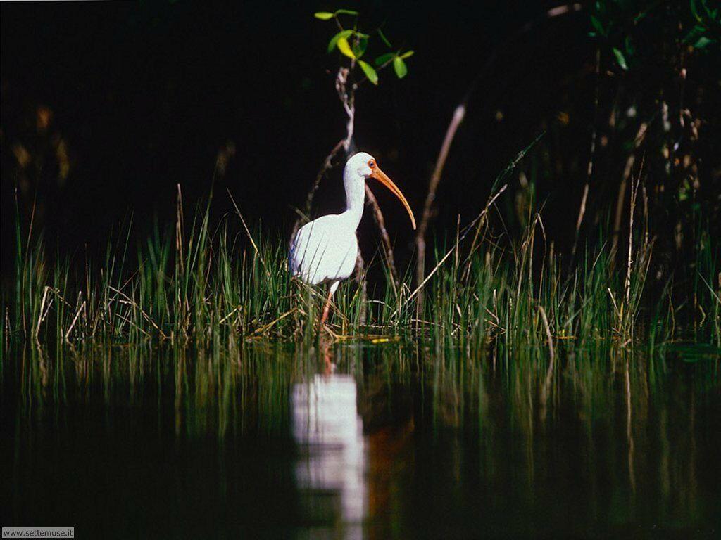 Foto di Uccelli vari 050