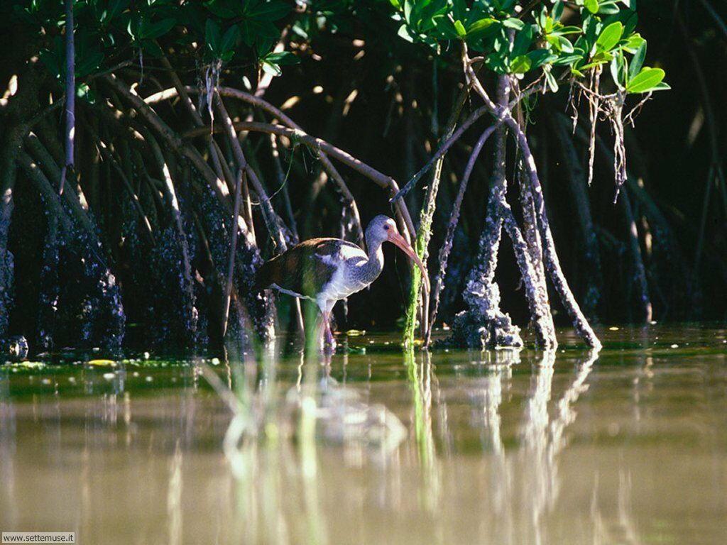 Foto di Uccelli vari 051