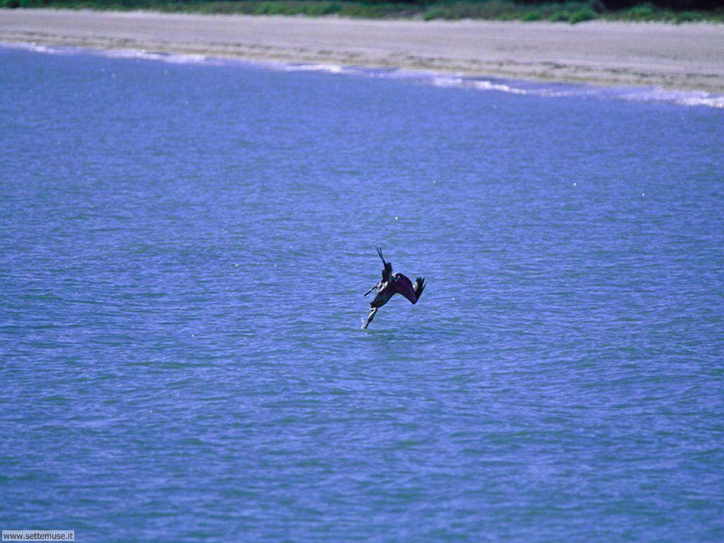 Foto di Uccelli vari 052