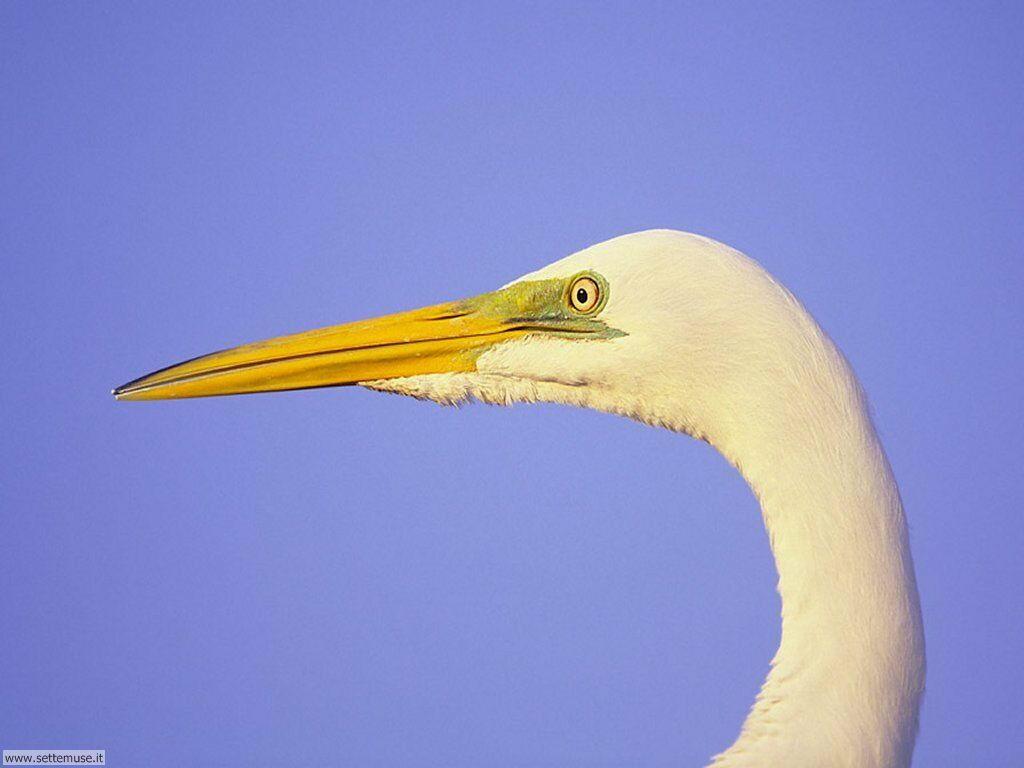 Foto di Uccelli 054