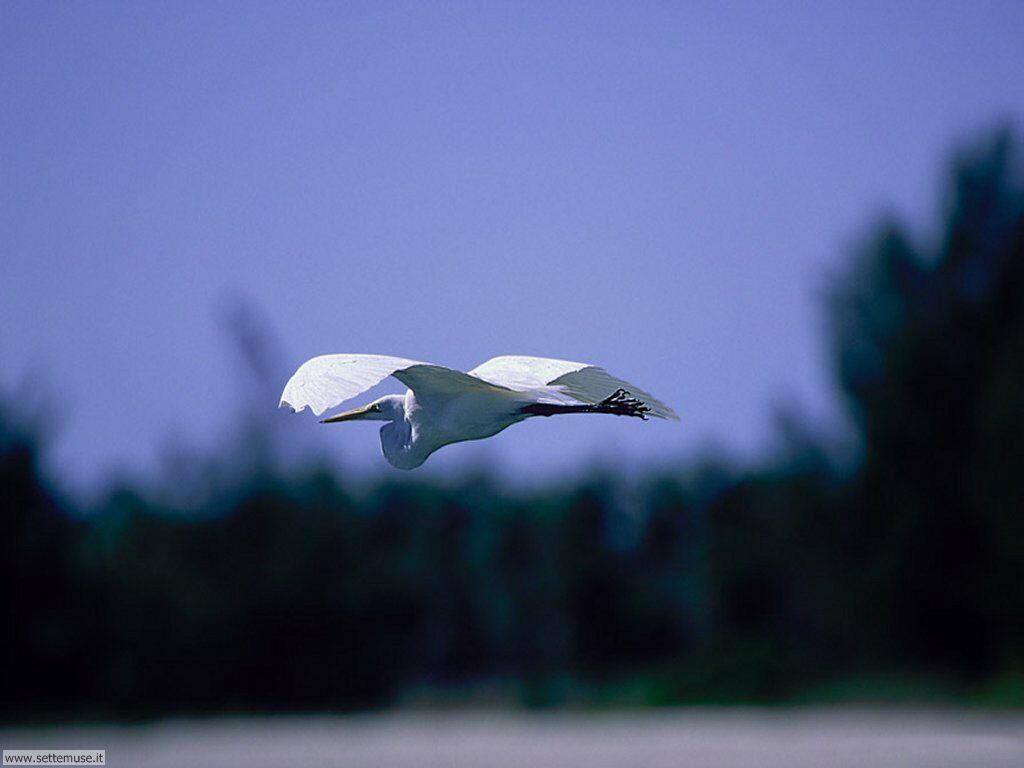 Foto di Uccelli 055