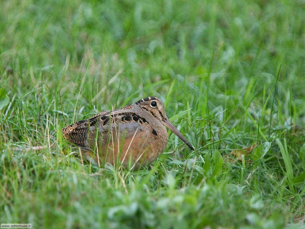 Foto di Uccelli 059