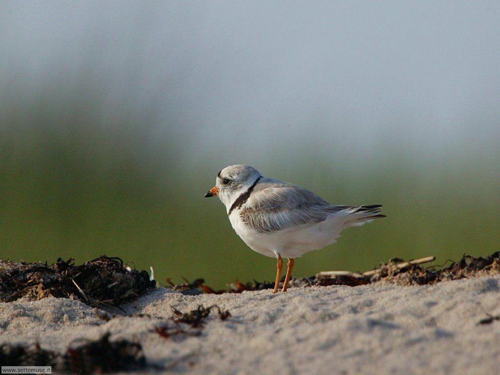 Foto di Uccelli 061