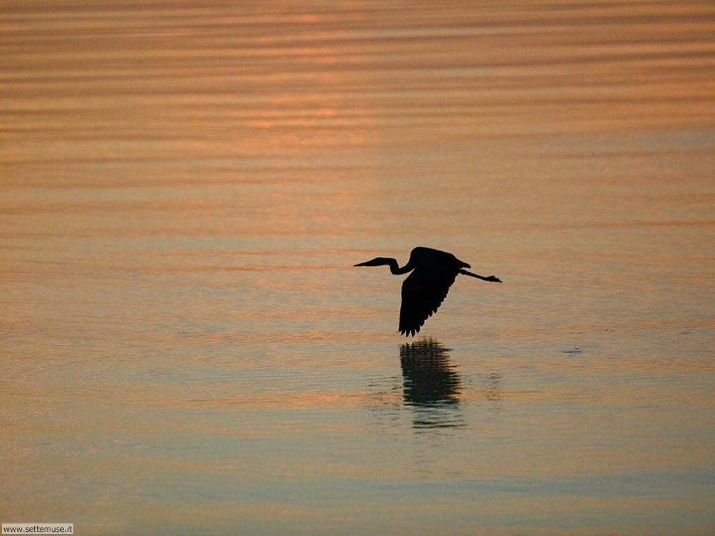 Foto di Uccelli 066