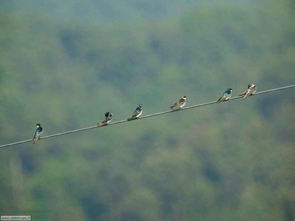Foto di Uccelli 073
