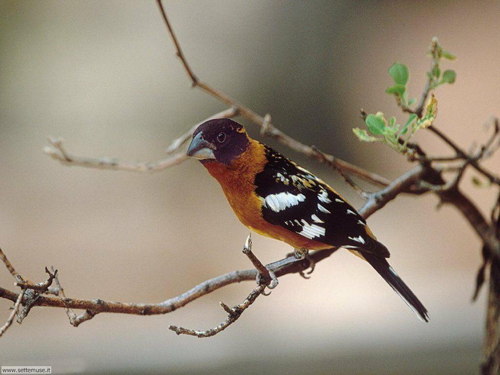Foto di Uccelli 076