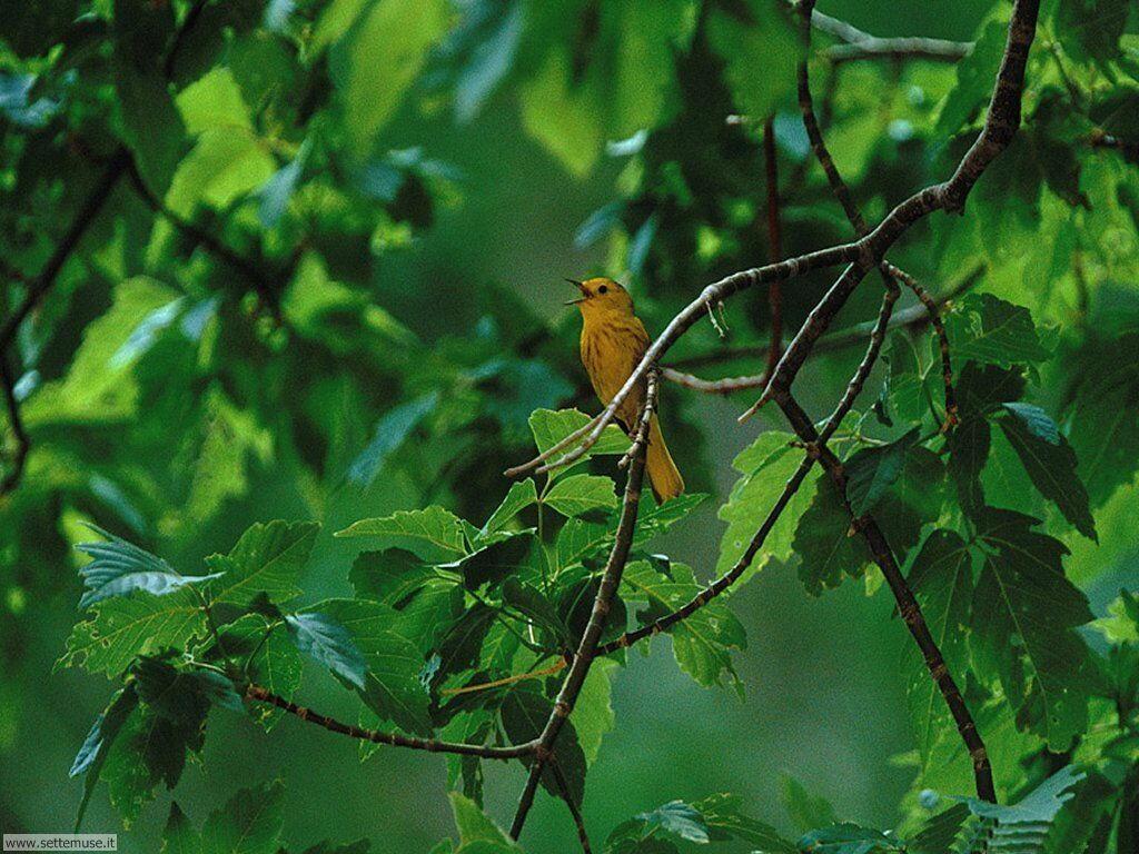 Foto di Uccelli 078