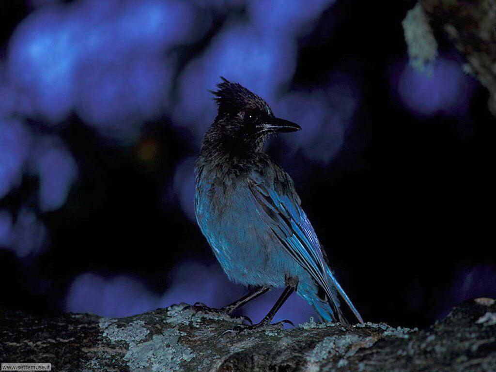 Foto di Uccelli 081