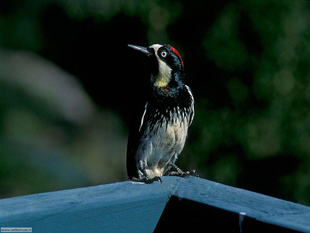 Foto di Uccelli 082
