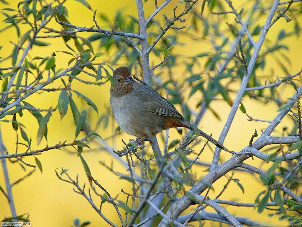 Foto di Uccelli 084