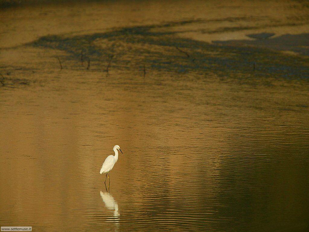 Foto di Uccelli 088