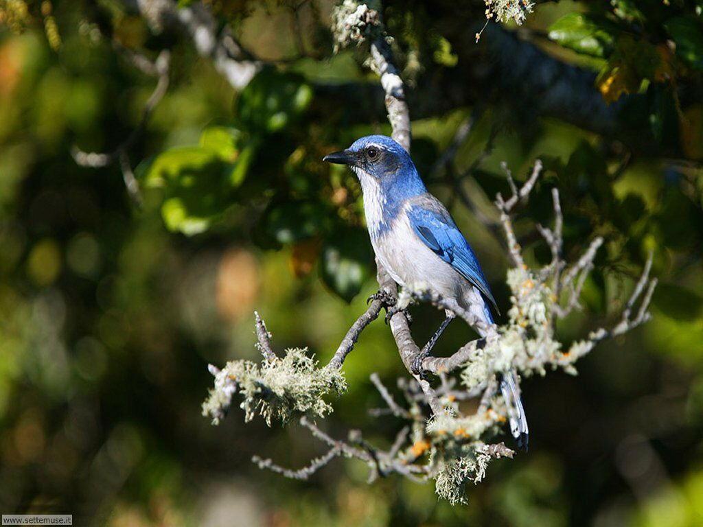 Foto di Uccelli 091