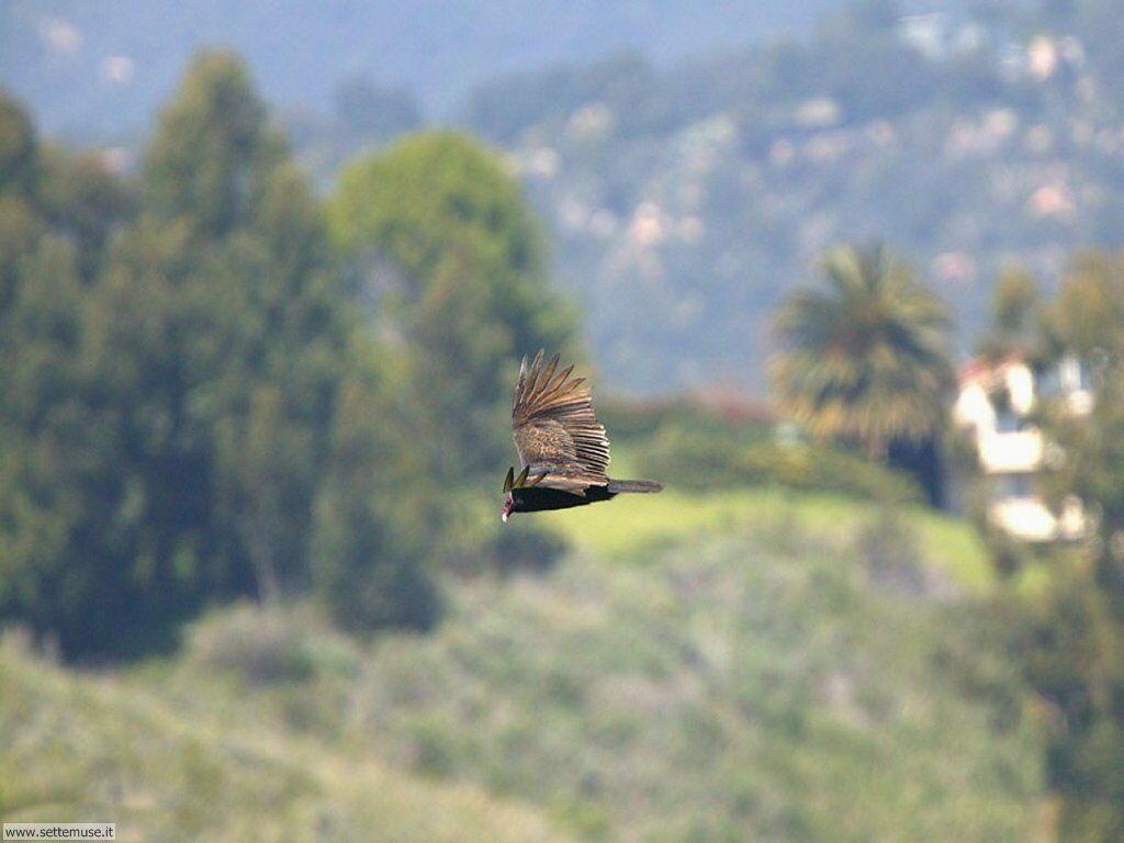 Foto di Uccelli 092