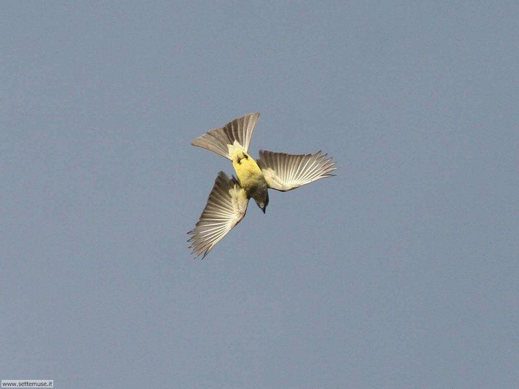 Foto di Uccelli 097