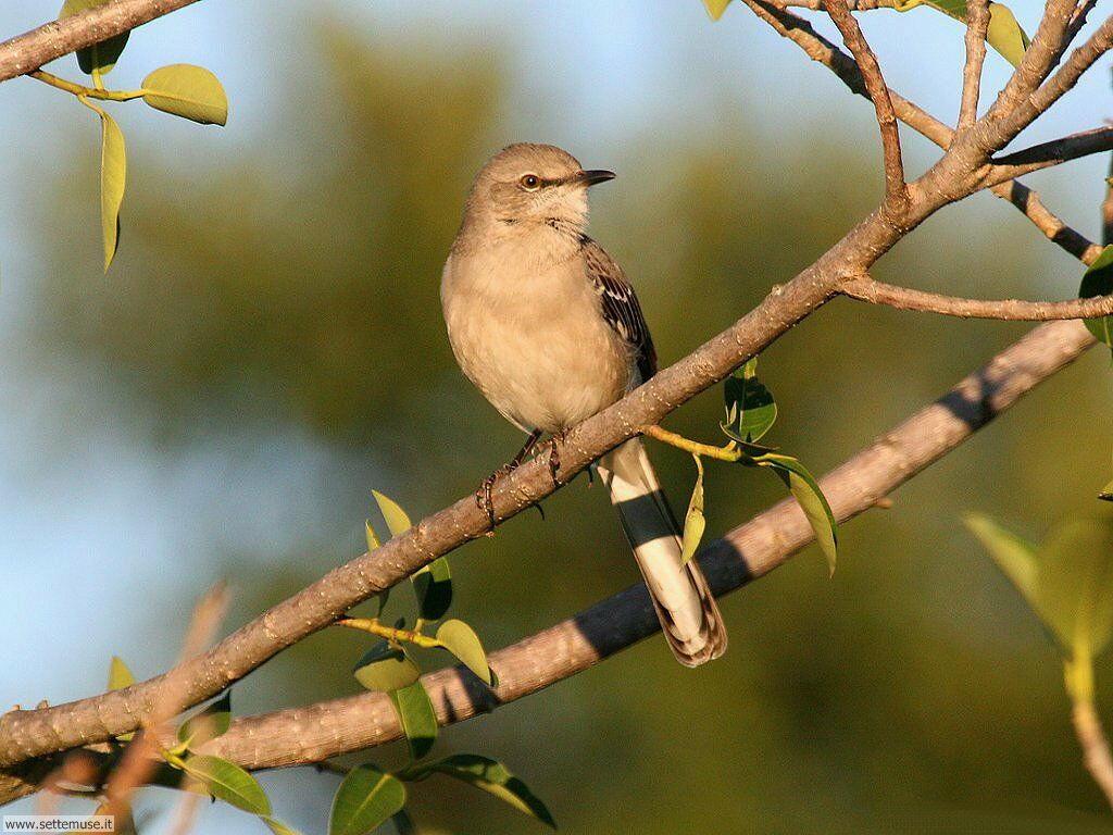 Foto di Uccelli 098
