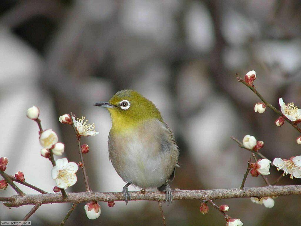 Foto di Uccelli 002
