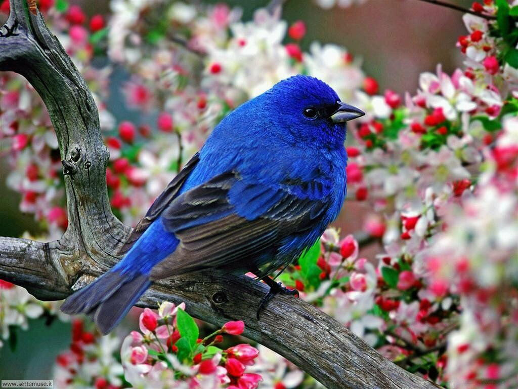 Foto di Uccelli 005