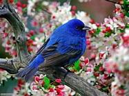 Foto sfondi uccelli vari 2