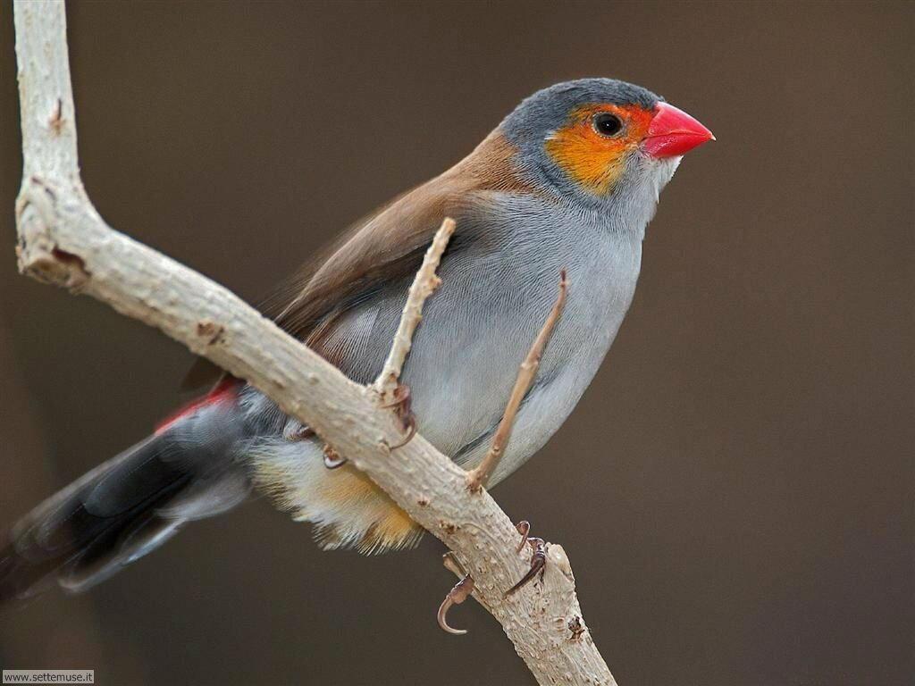 Foto di Uccelli 007