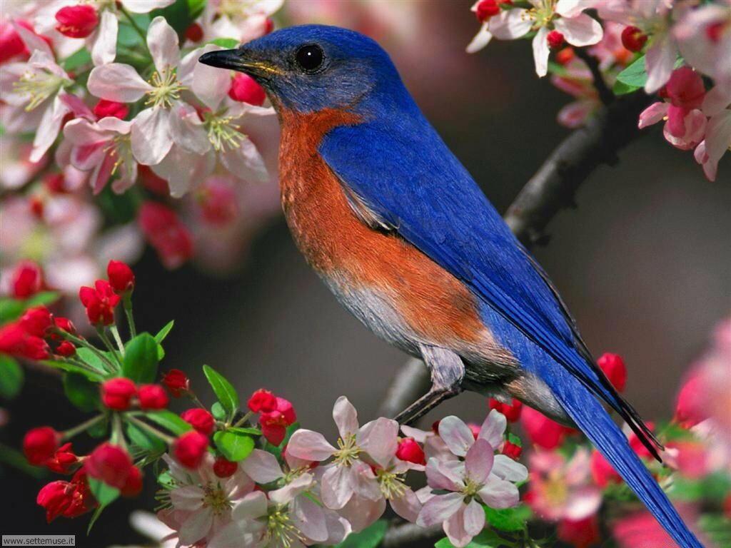 Foto di Uccelli 008