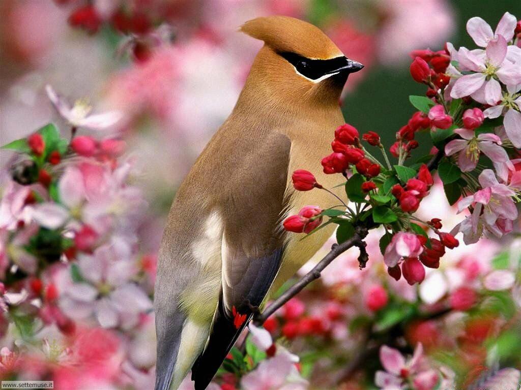 Foto di Uccelli 009