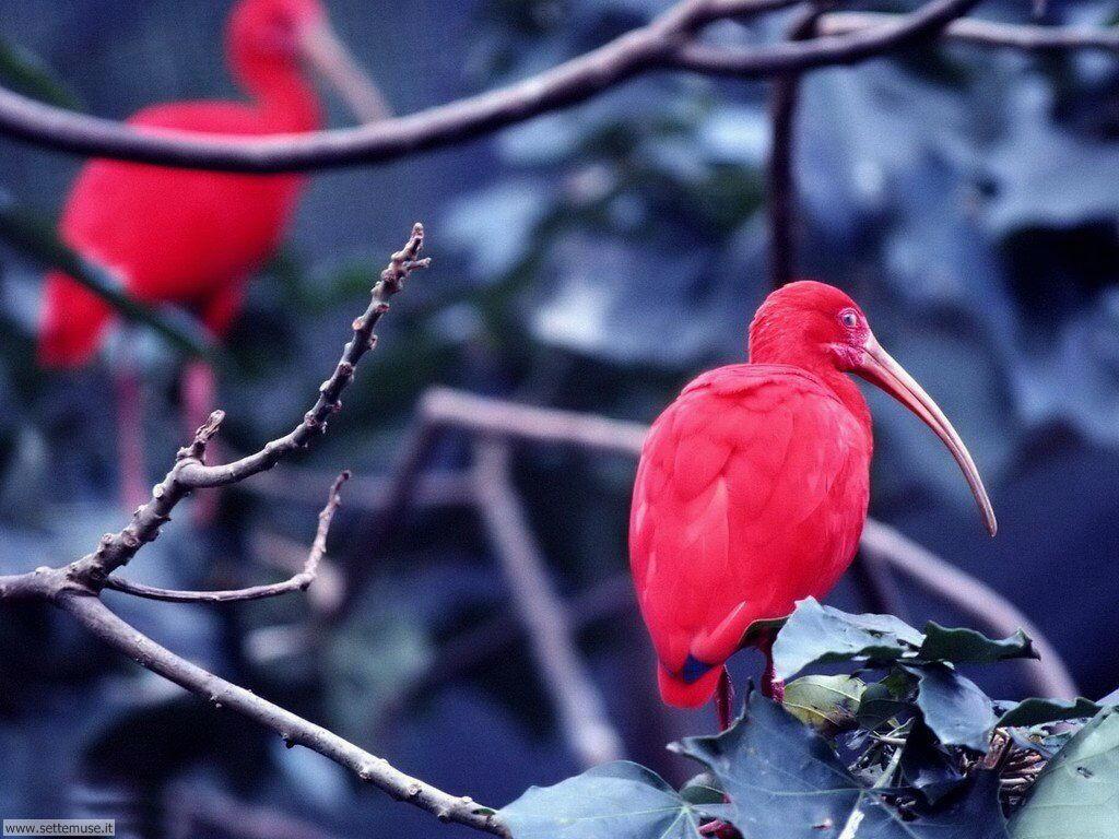 Foto di Uccelli 022
