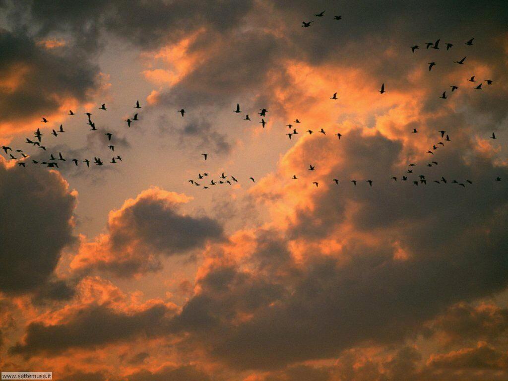 Foto di Uccelli 024
