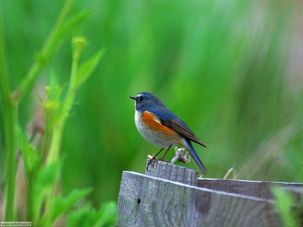 Foto di Uccelli 025