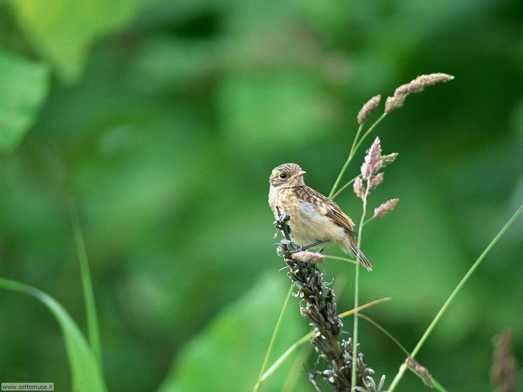Foto di Uccelli 026