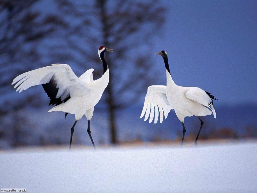 Foto di Uccelli 027