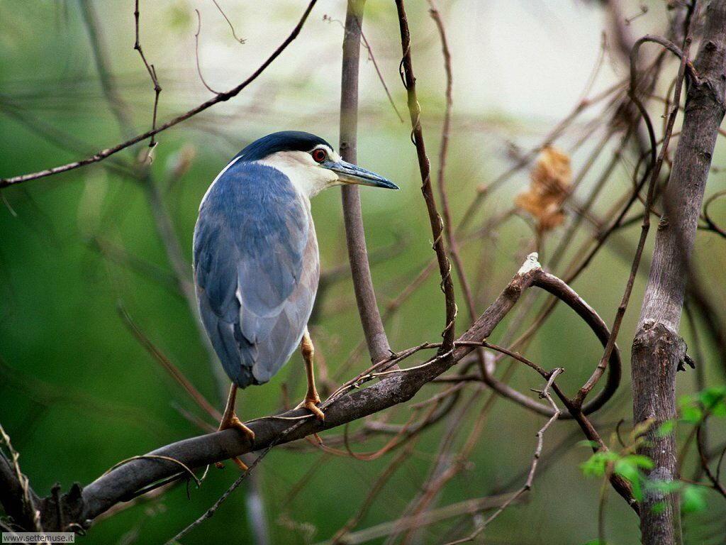 Foto di Uccelli 028