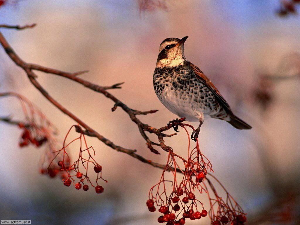 Foto di Uccelli 035