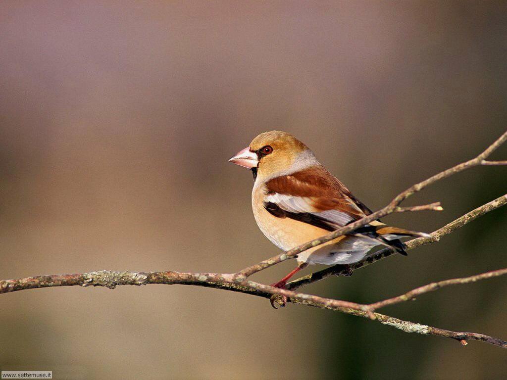 Foto di Uccelli 036