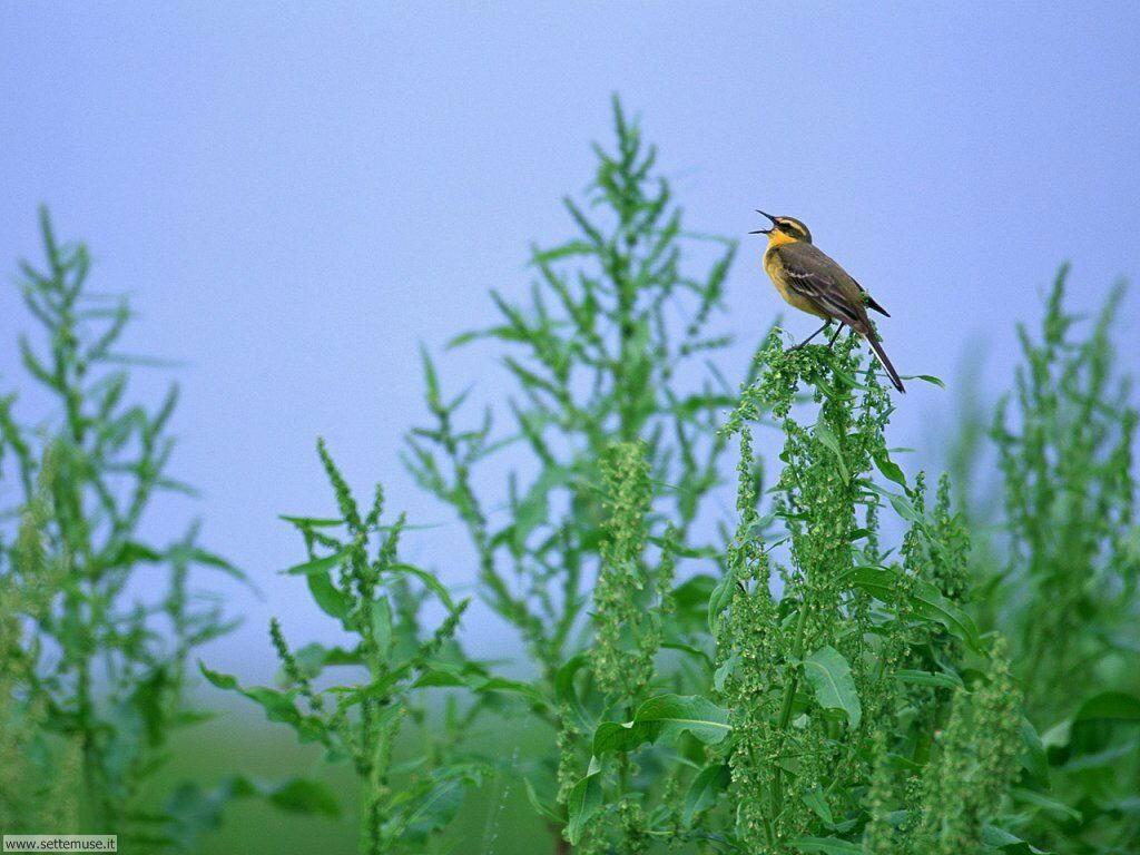 Foto di Uccelli 038