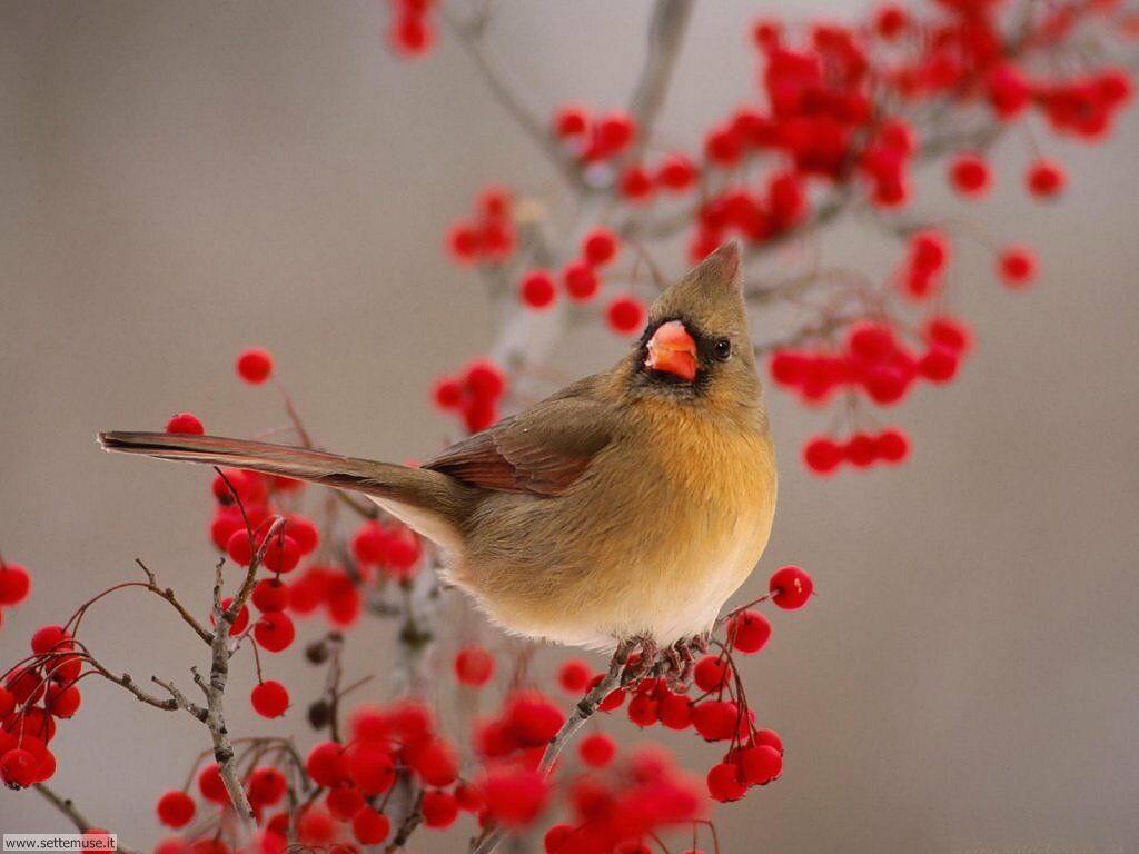 Foto di Uccelli 041