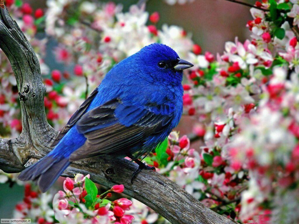 Foto di Uccelli 042