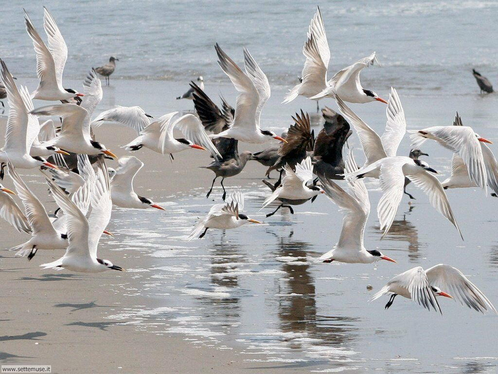 Foto di Uccelli 044
