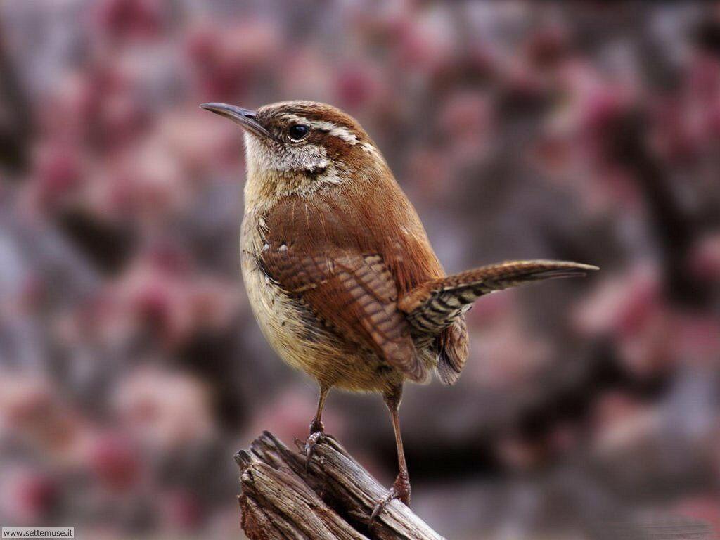 Foto di Uccelli 045