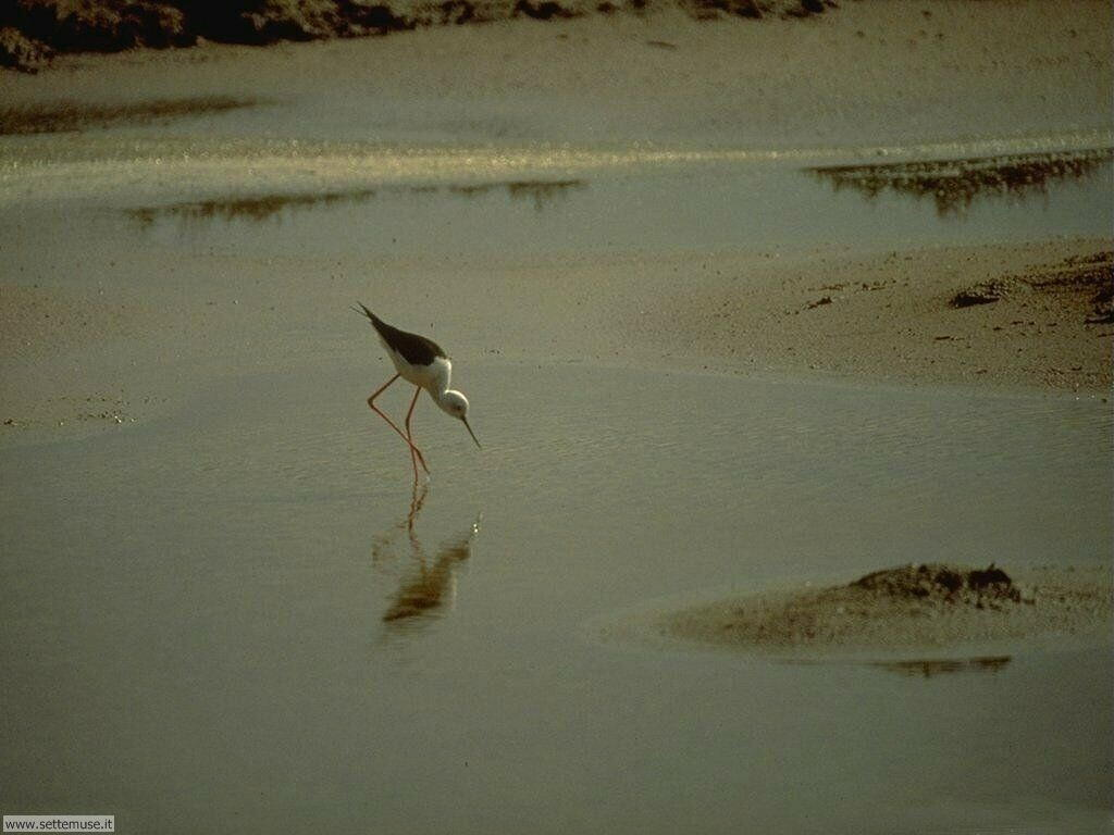 Foto di Uccelli 050