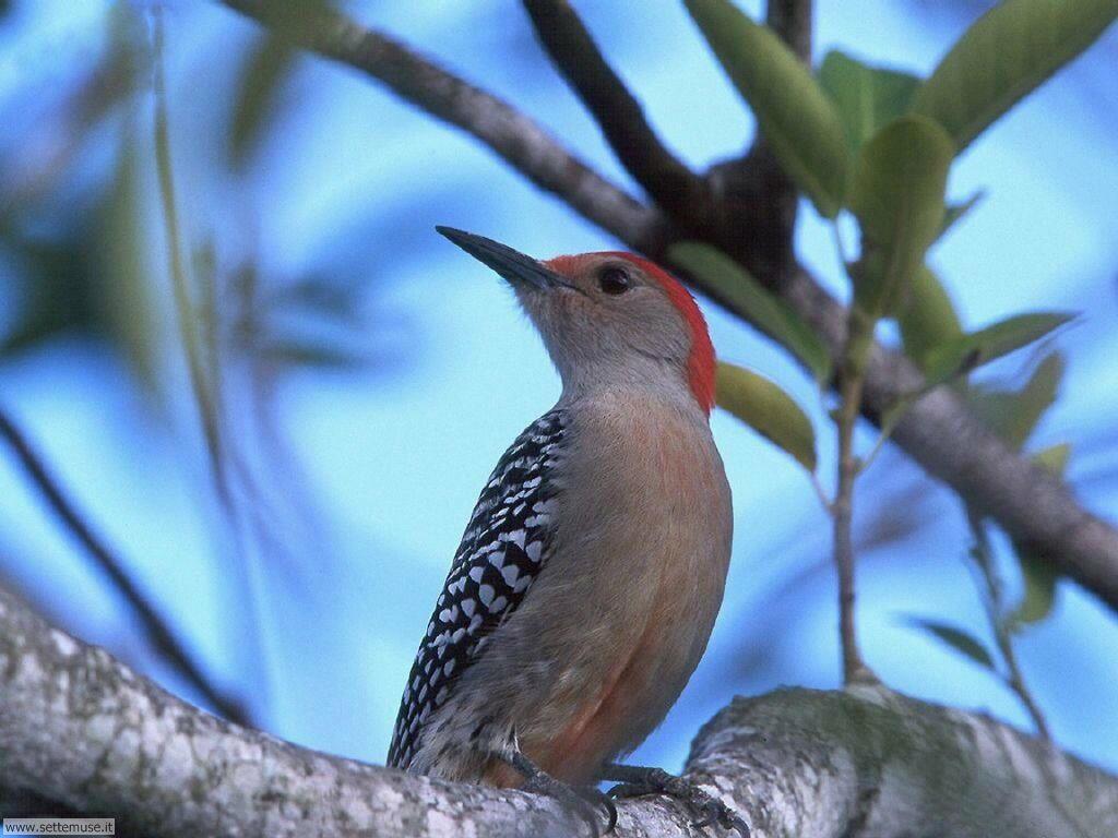 Foto di Uccelli 056