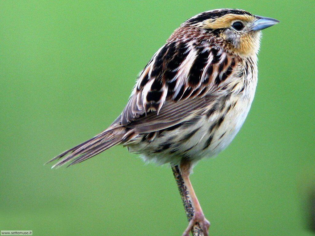 Sfondi uccelli vari 4 foto gratis
