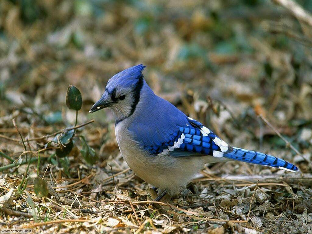 Foto di Uccelli 062